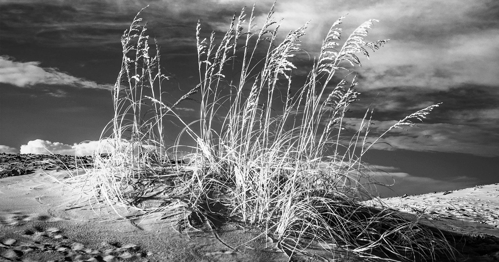 Dune by Richard Binhammer