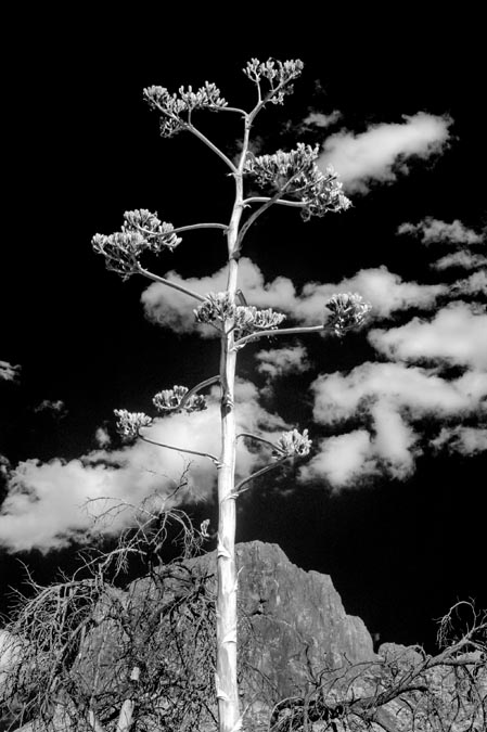 Cactus in the Sky by Richard Binhammer