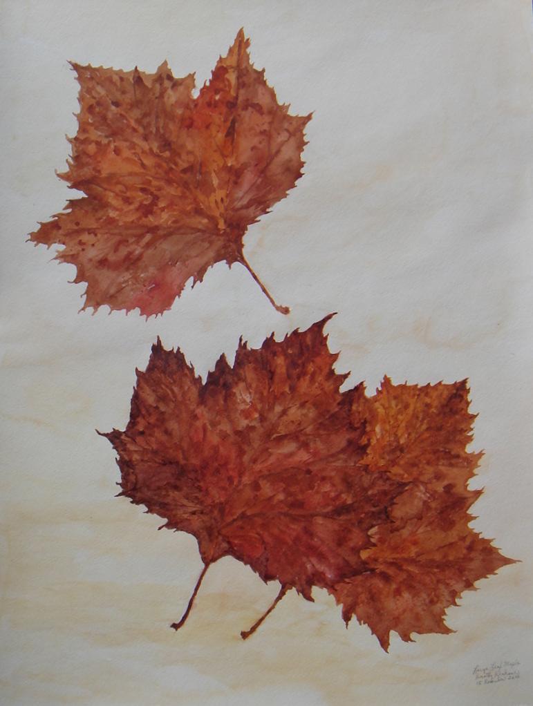 Large Leaf Maple by Dorothy Krakauer
